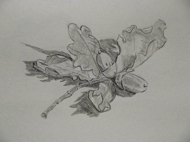 drawing sketch study of acorns and oak leaves tree nature still life art illustration landscape essex