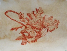 Study Sketch acorns oak tree leaves da vinci renaissance illustration art nature essex