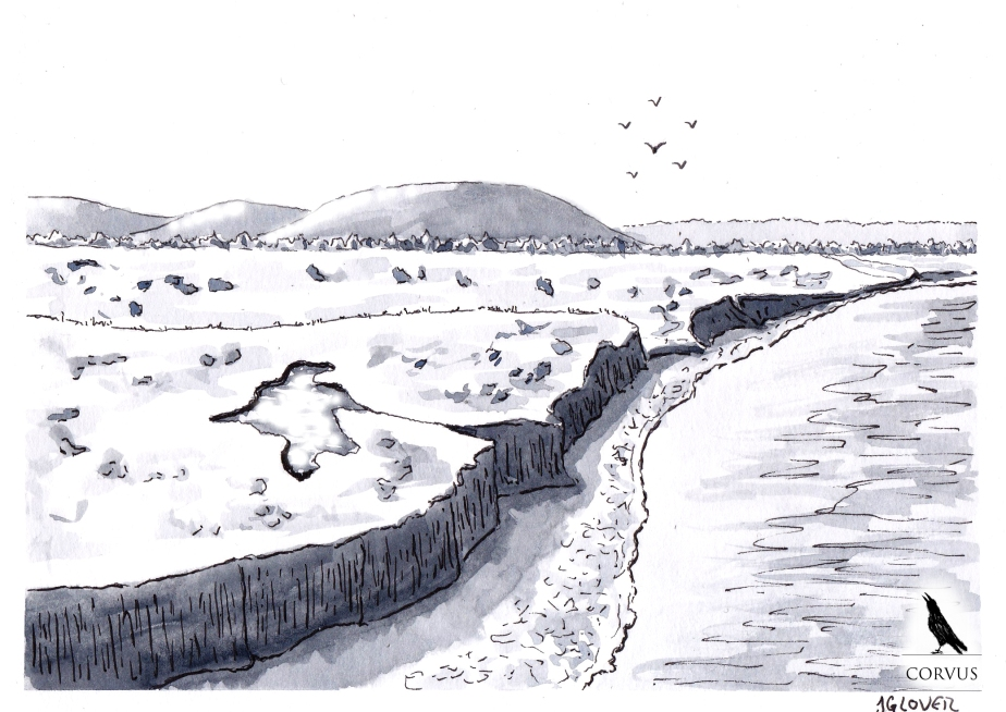Corvus - art - illustration - graphic novel - web comic - story - history - inktober -ink - drawing