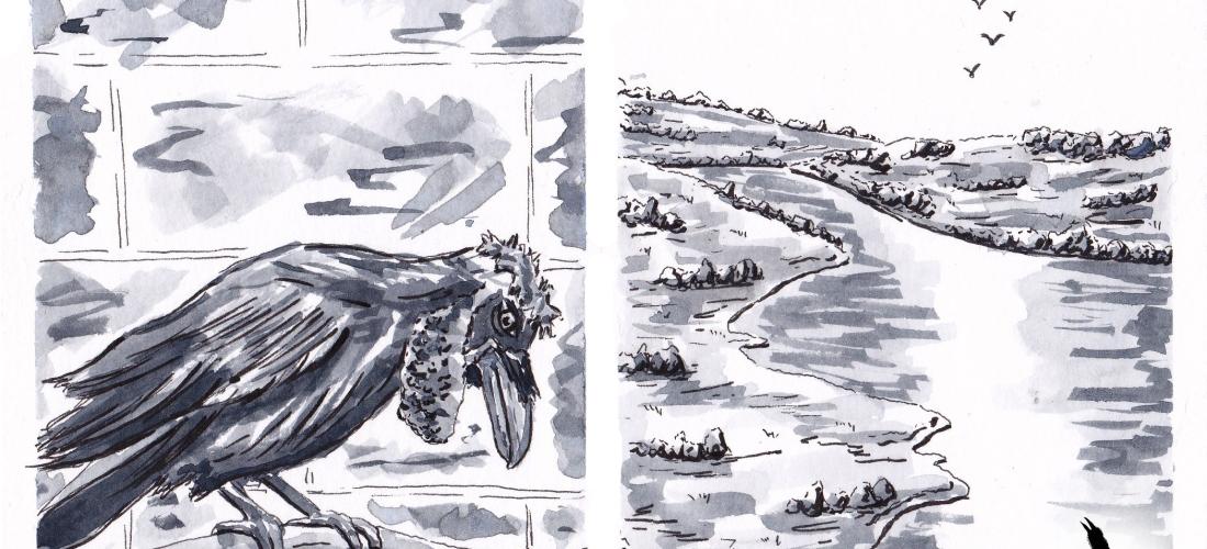 Corvus - graphic novel - web comic - illustration - art - ink - drawing - inktober - ravens - crows