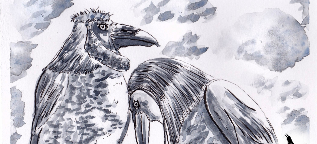 Corvus - Graphic Novel - Art - Illustration - Folklore - Fiction - Story - Fantasy - Drawing