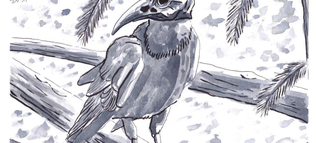 Corvus - Art - Illustration - Graphic Novel - Fantasy - Story - Drawing - Web Comic - Folklore