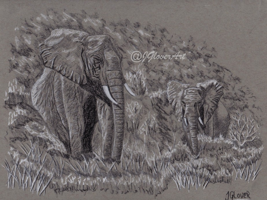 Wild Elephants of Africa – Charcoal Drawing on Toned Paper – Wildlife Art Illustration
