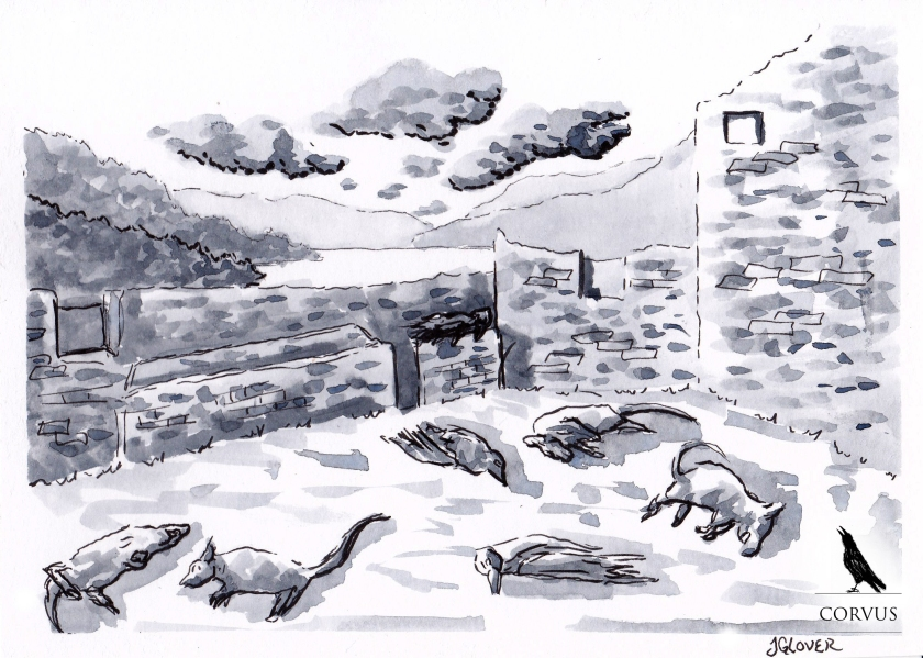 Corvus - Graphic Novel - Drawing - Illustration - Folkore - Art - Story