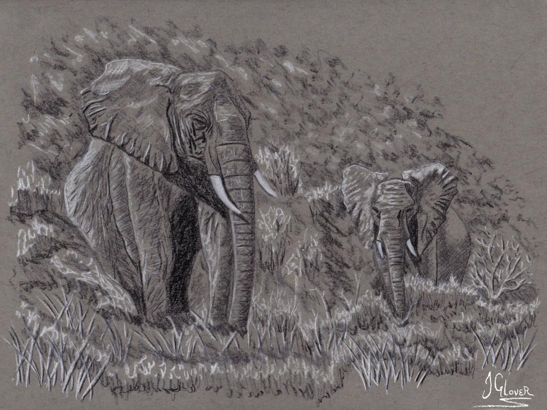 Wild Elephants of Africa